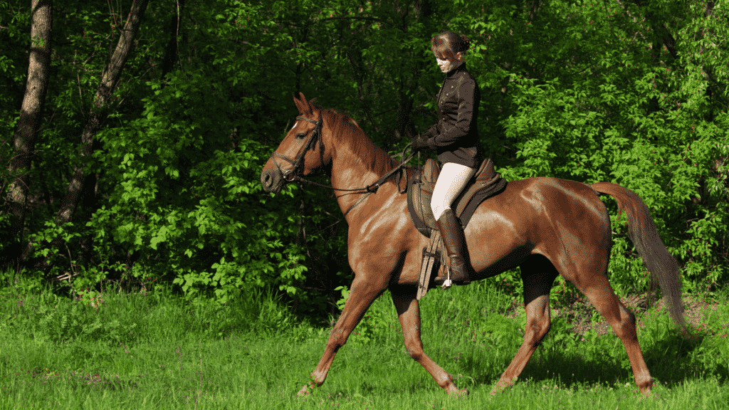 what to expect at your first english horseback riding lesson