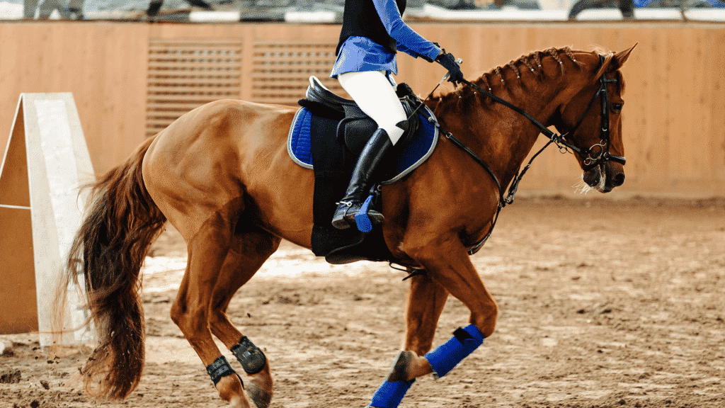 breeches are important for english riding due to friction