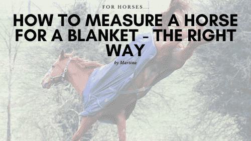 How to Measure a Horse for a Blanket