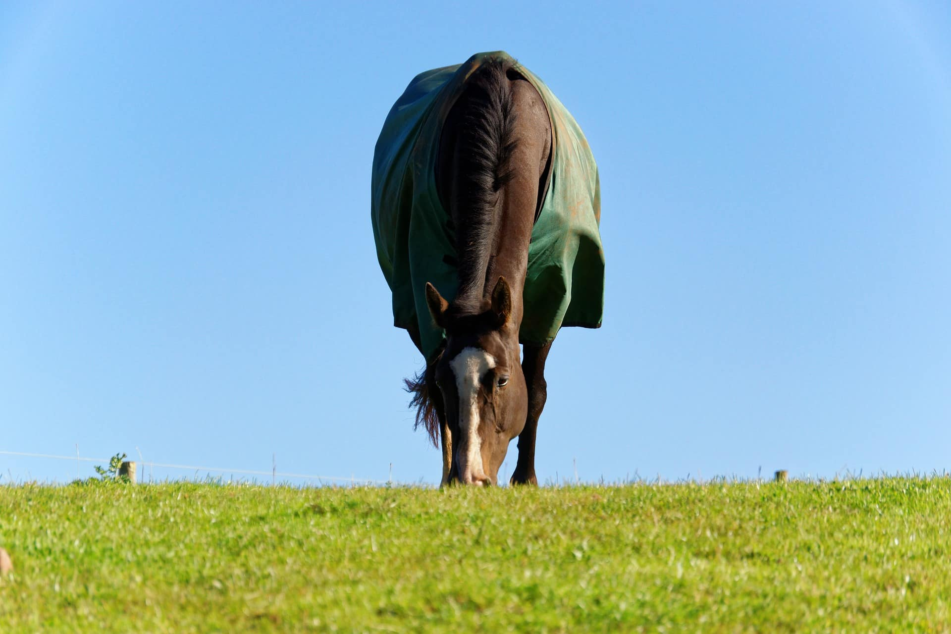 Check that your horse can graze
