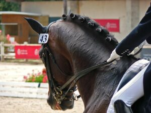 Dressage riders gear and apparel