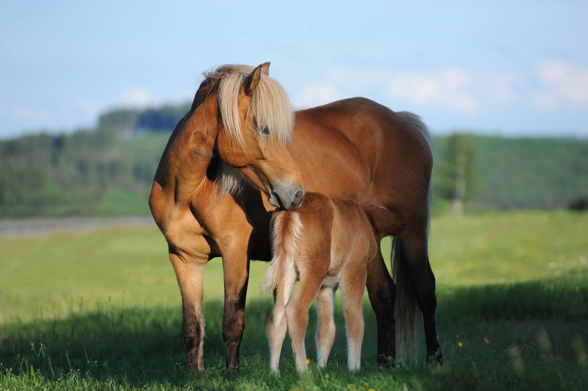 healthy horse healthcare and supplements