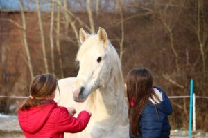 horse friends are the best friends