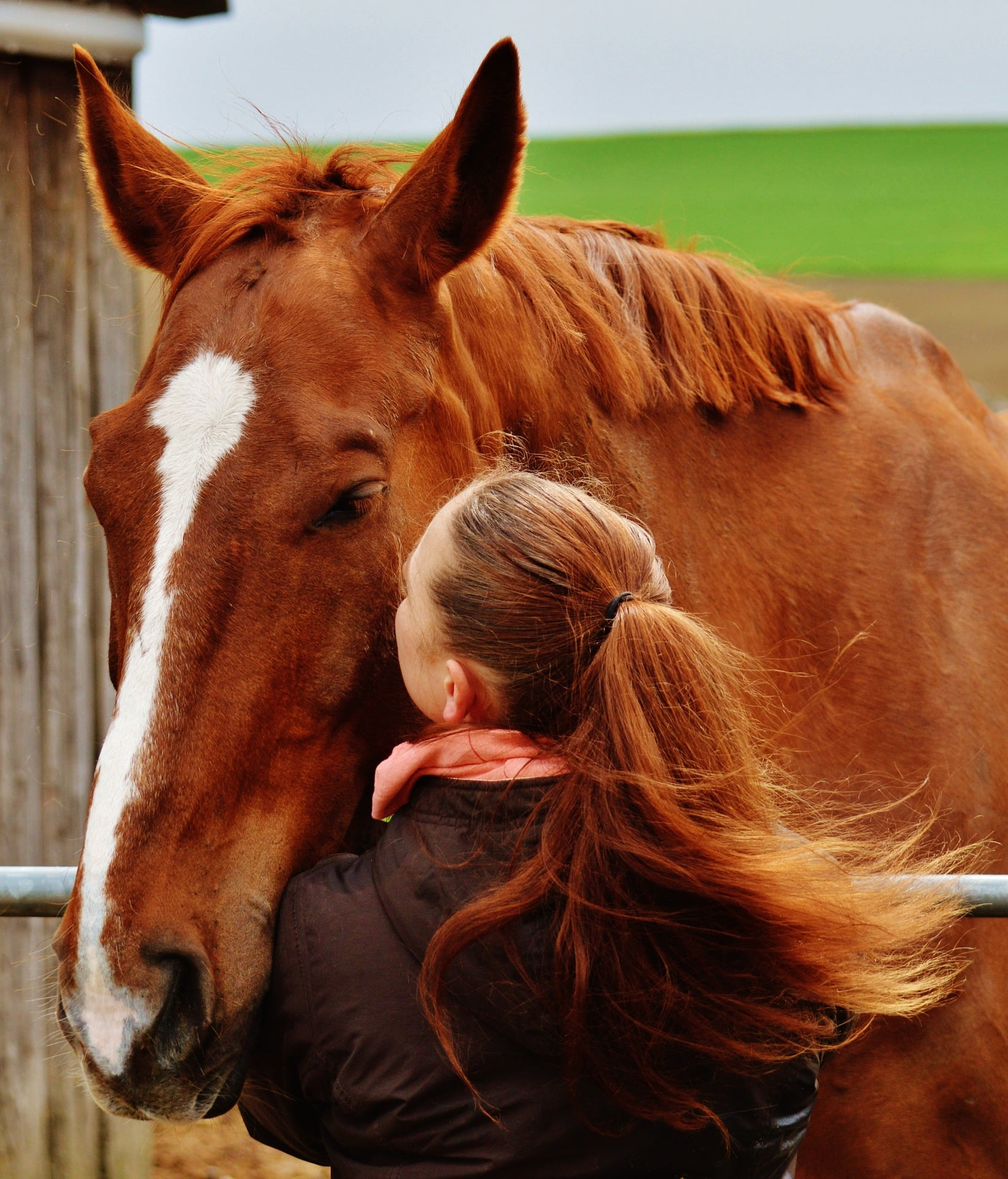 Should I buy my daughter a horse? horses boost your immune system