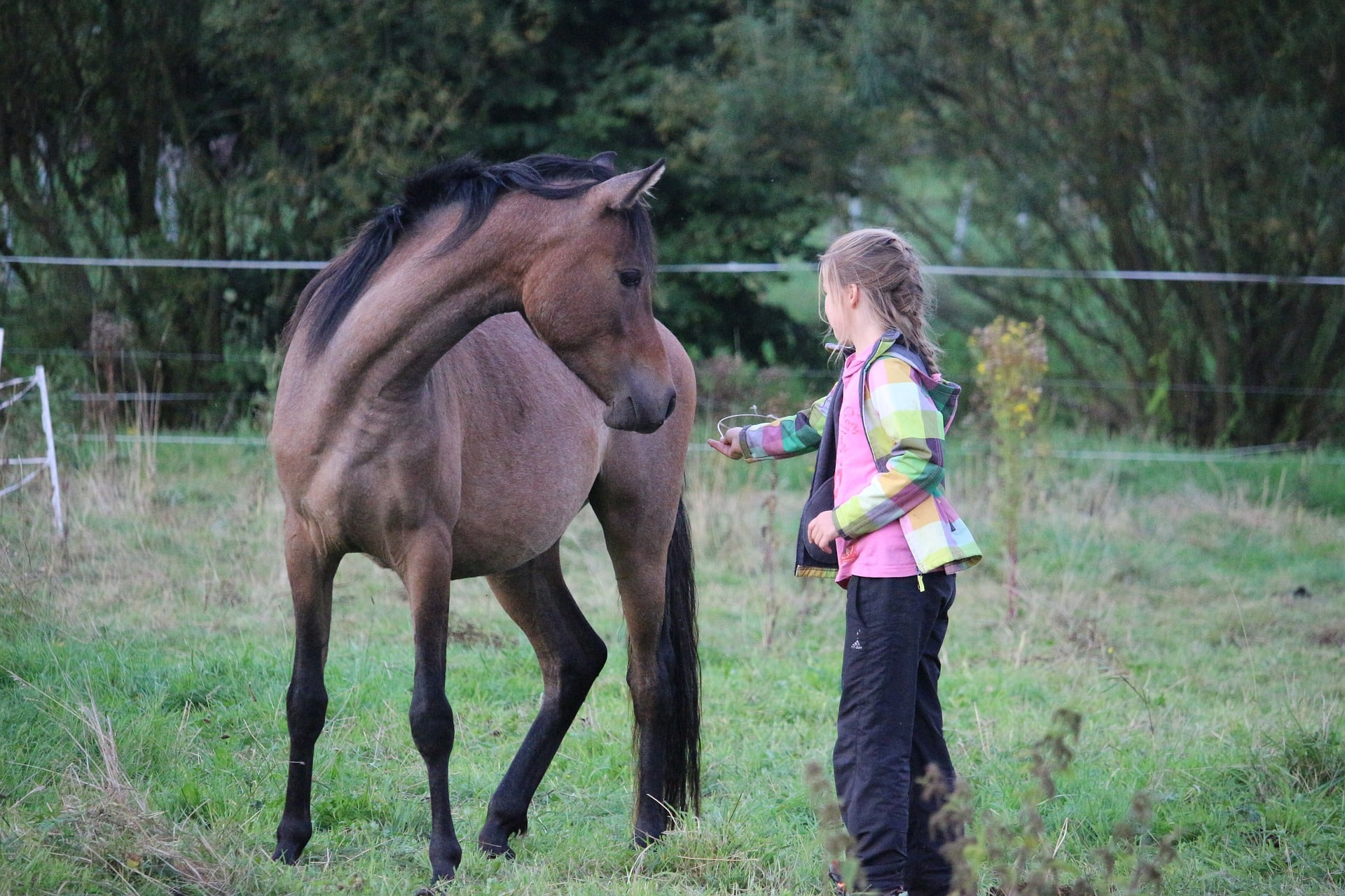 Should I buy my daughter a horse? horses teach responsibility