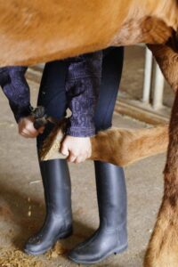 how to groom a horse