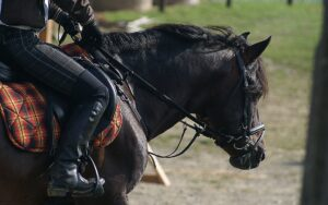 Step 1 equestrian boots and bridles