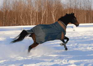 Your horse should be able to move freely