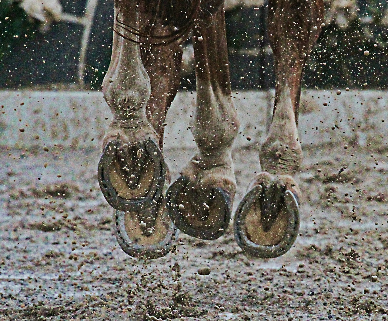 Do equine joint supplements really work?