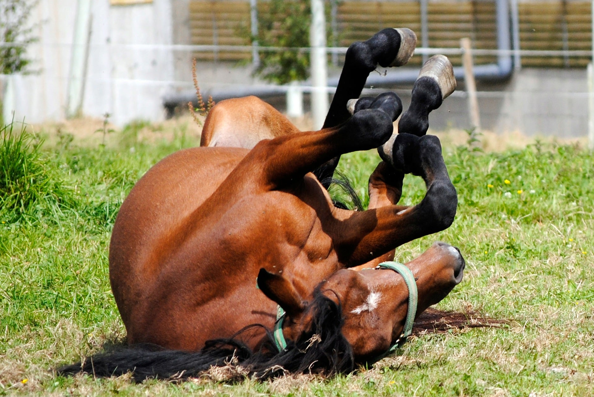 The key is finding what works for your horse