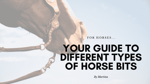 Your Guide to Different Types of Horse Bits