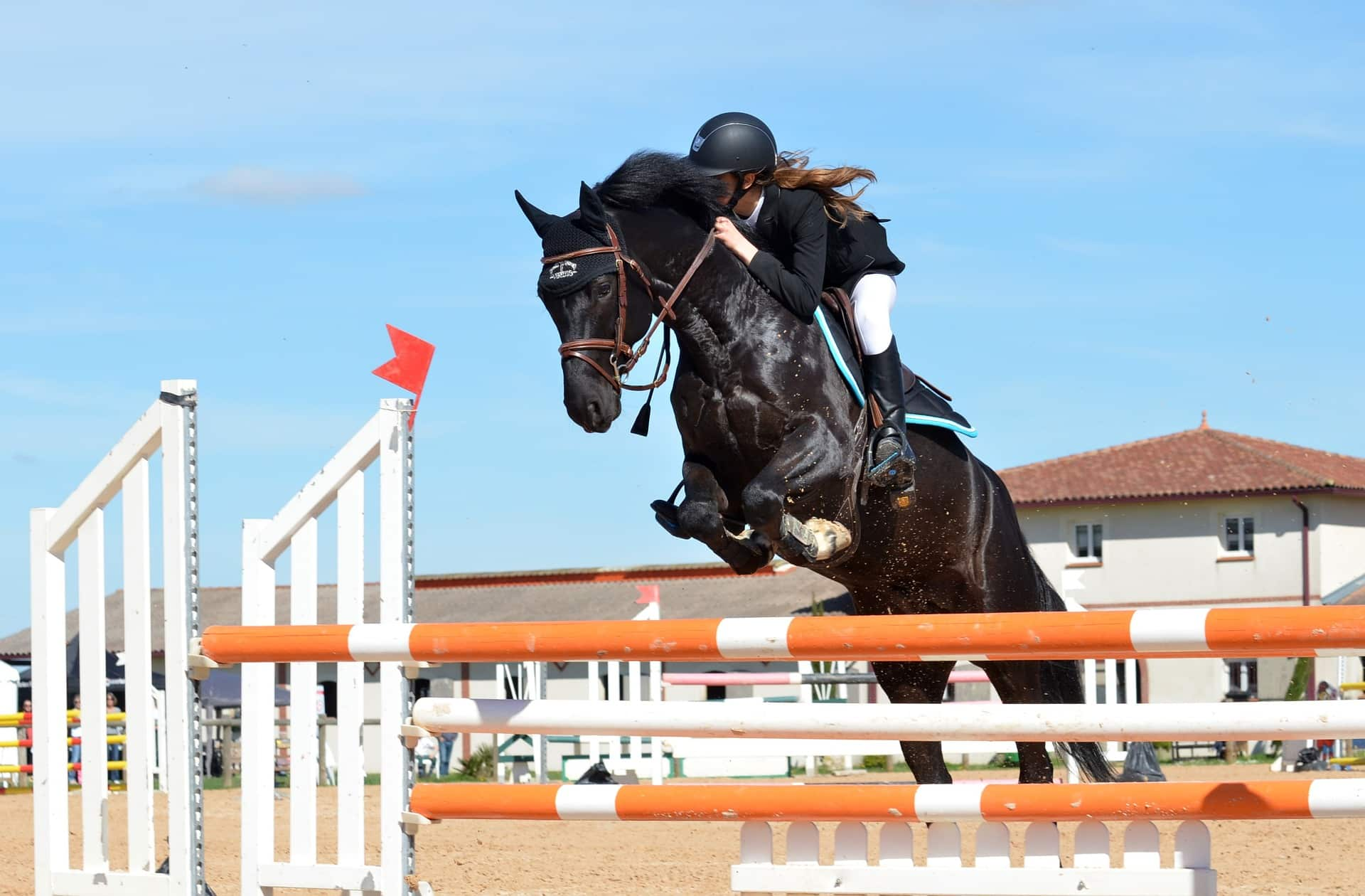 active horses need a horse joint supplement
