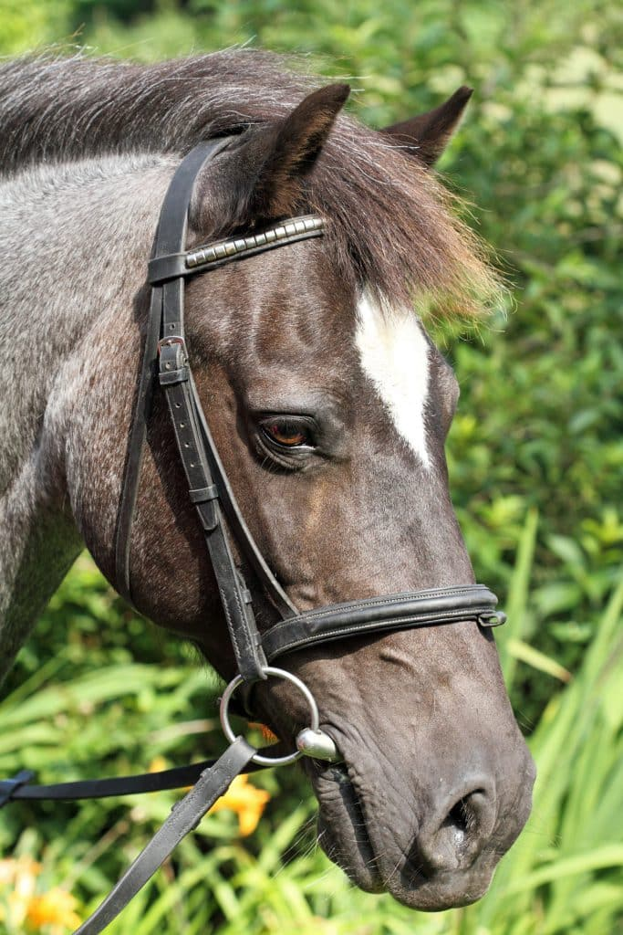 Example of a snaffle bit