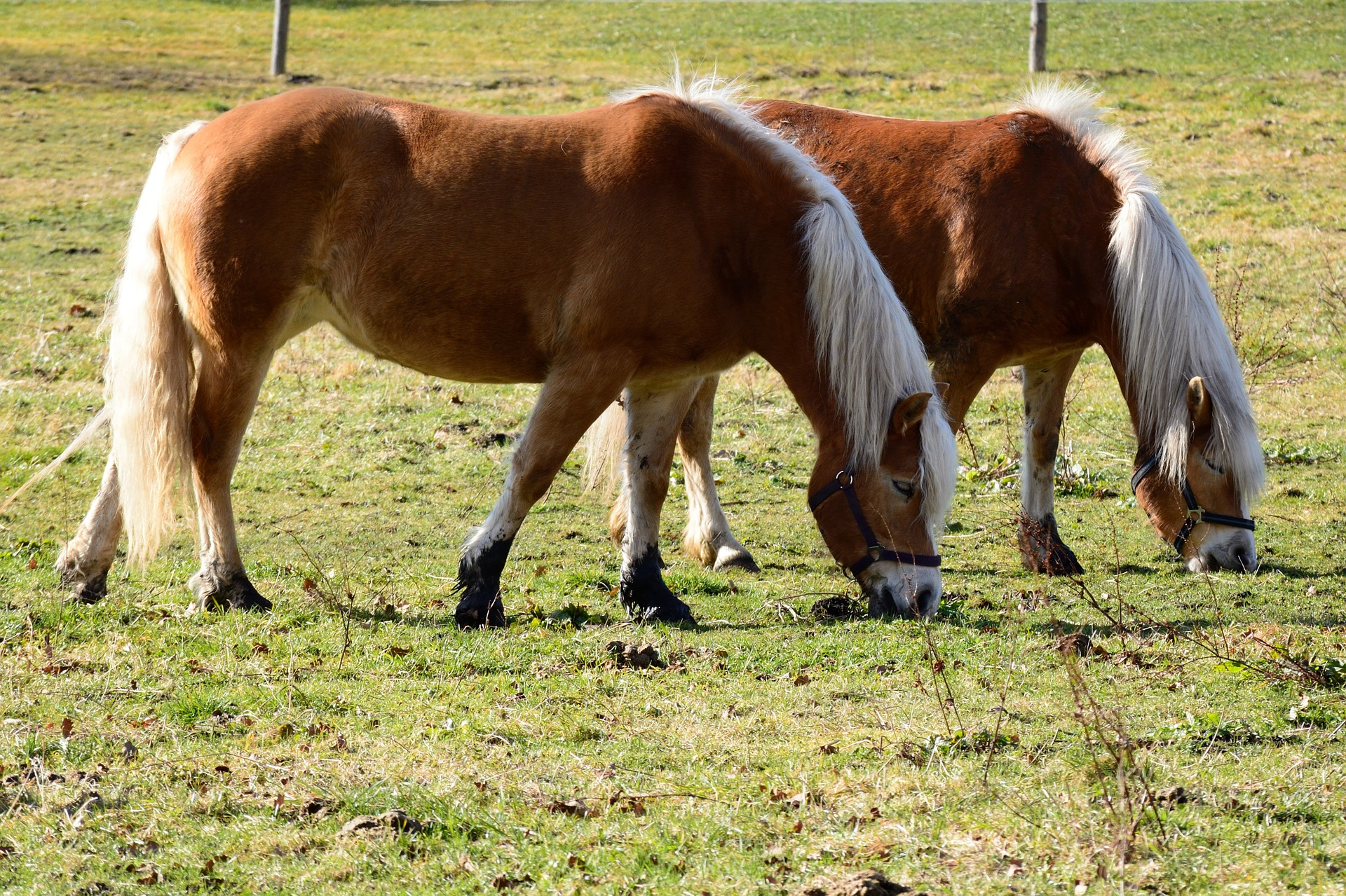 joint supplements are optional for inactive horses