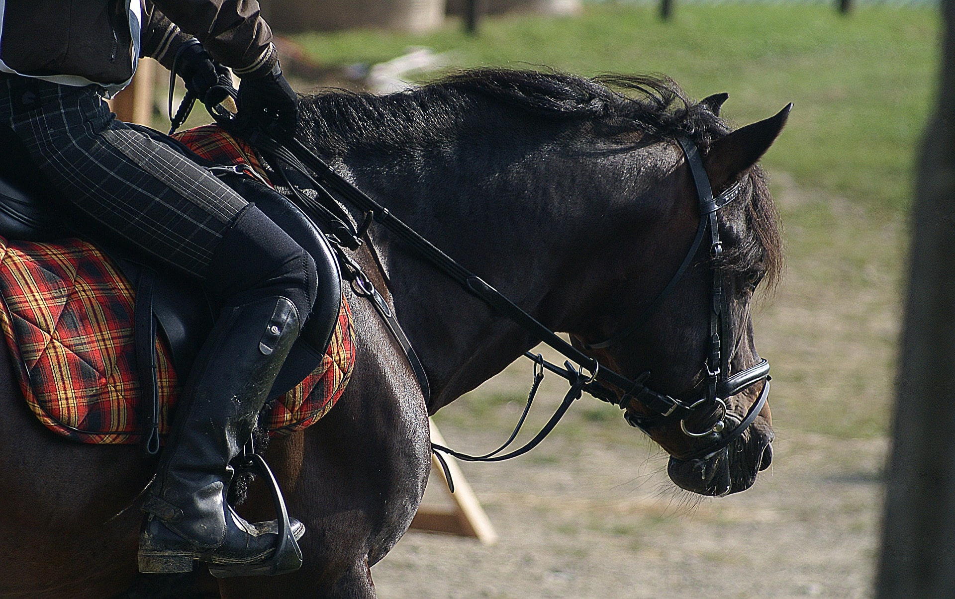 Different types of bits - Snaffle bits for English riding