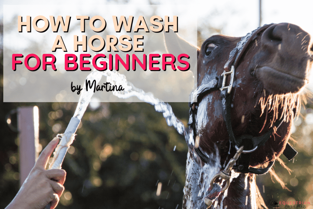 How to Wash a Horse for Beginners
