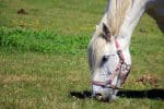 horses eat about 1.5 pounds of grass an hour