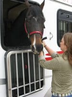 How to train a horse to load in a trailer, never say neigh-ver!