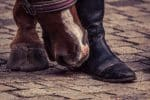 3 Fun Horse Riding Exercises that Help Bonding