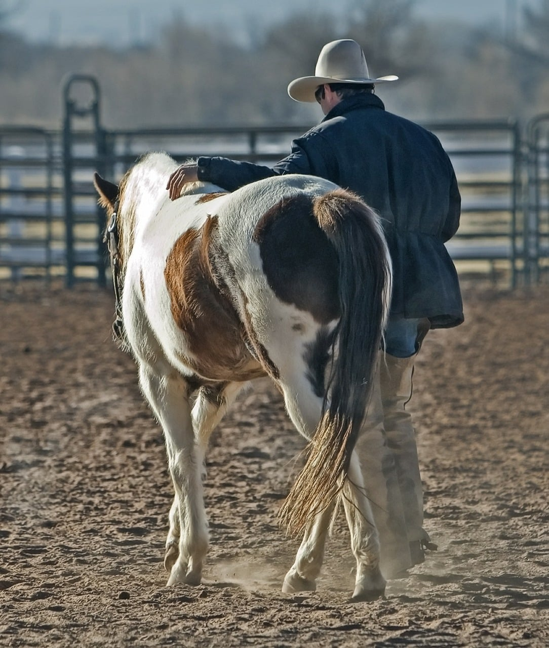 Your time and effort into your horse will pay off