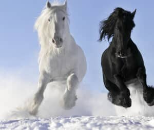 Can horse shampoo make your hair grow faster mane n tail review