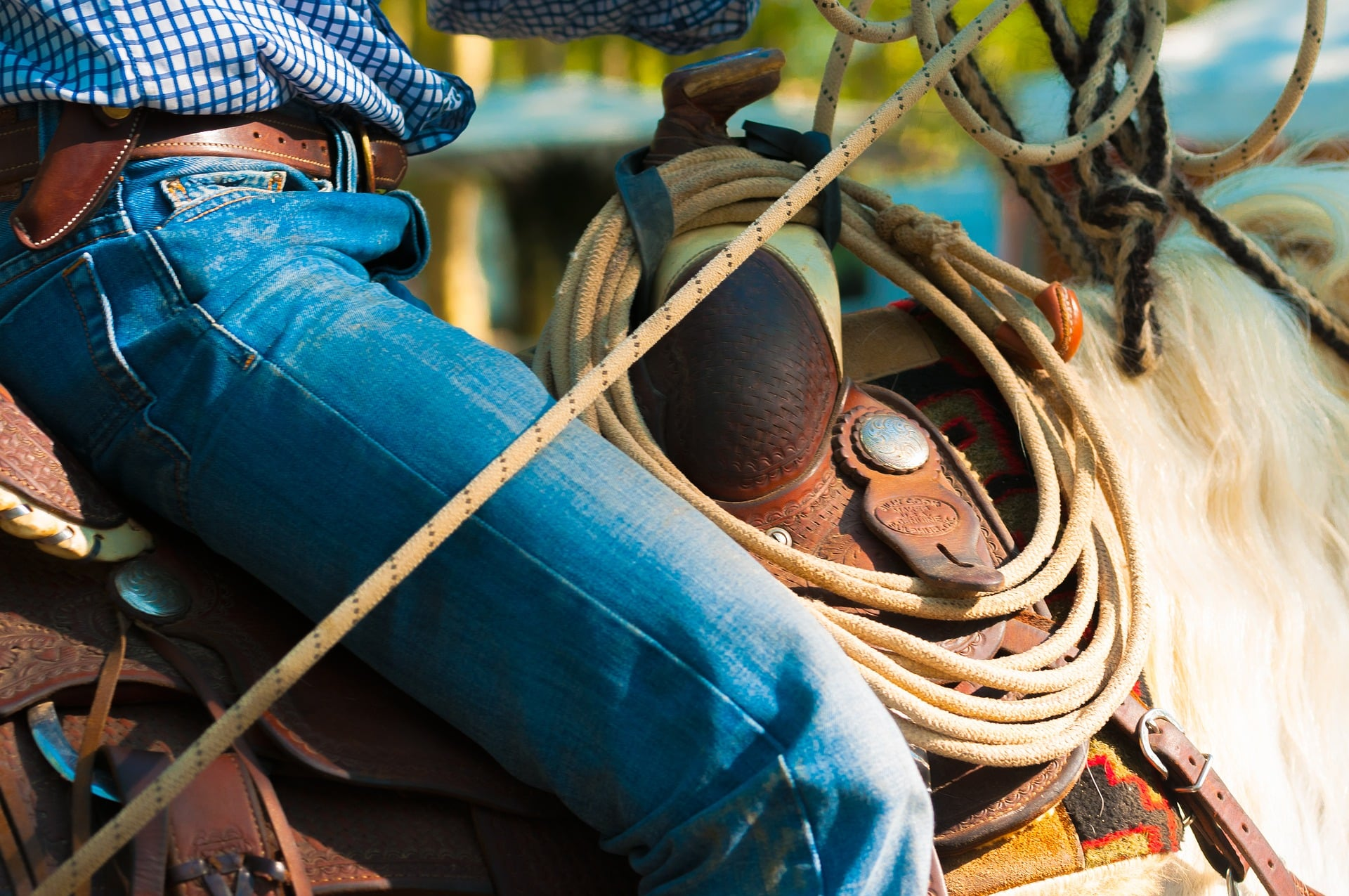 How To Buy Horse Tack For The First Time & What To Avoid 5