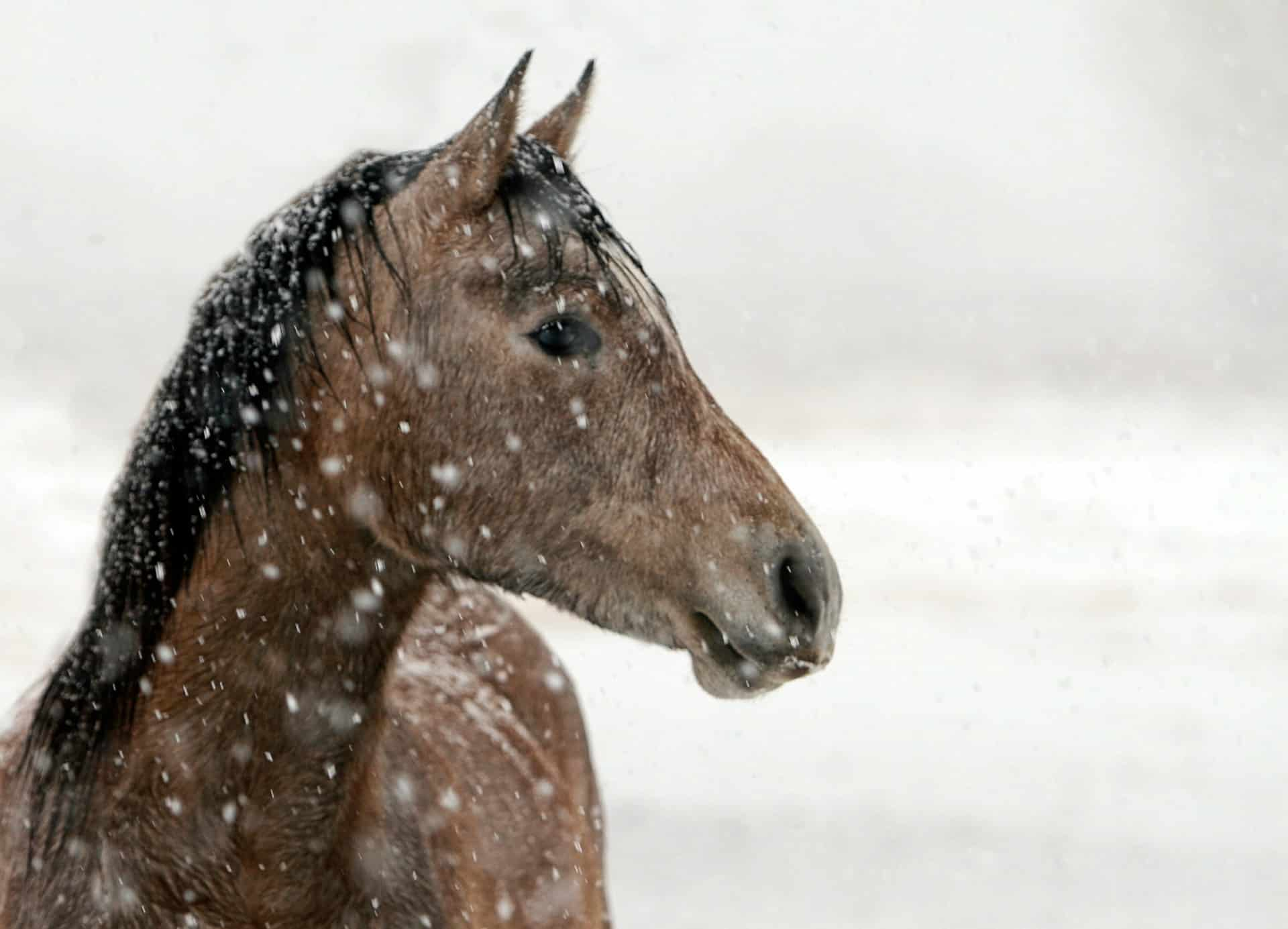 What to Wear Winter Horseback Riding