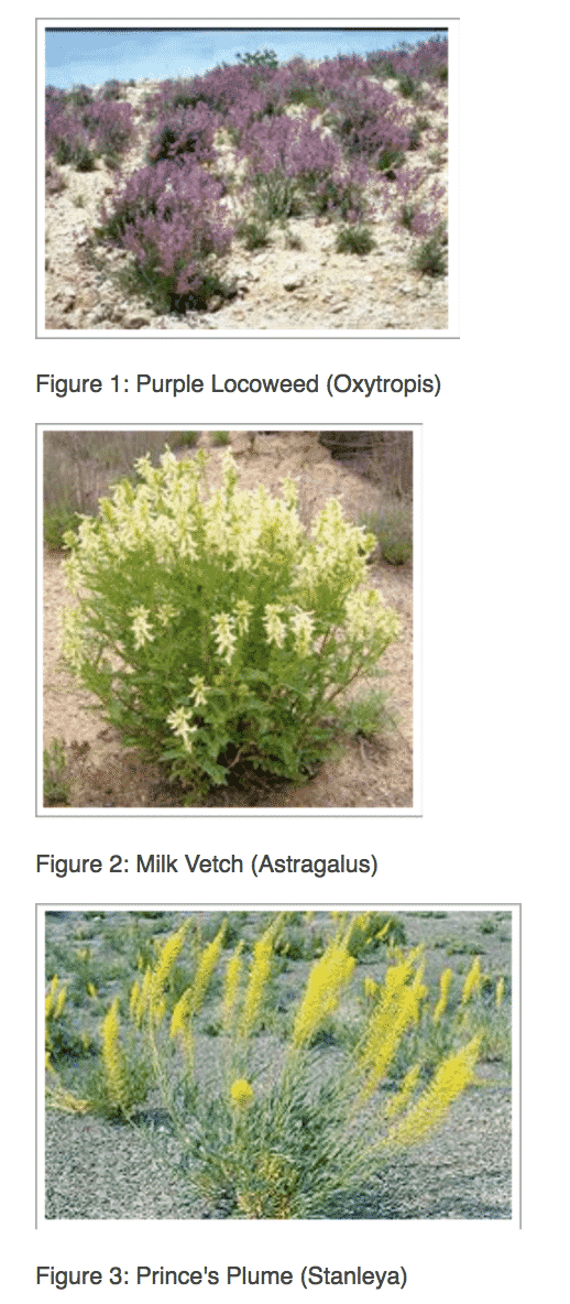 Plants that need high Selenium content in the soil
