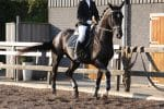 used horseback riding apparel online and where to get it