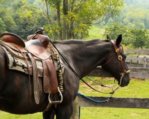 English Horse Saddle Pads & What to Look For   Equestrian Boots and