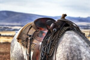 How English saddle pads are different than saddle blankets