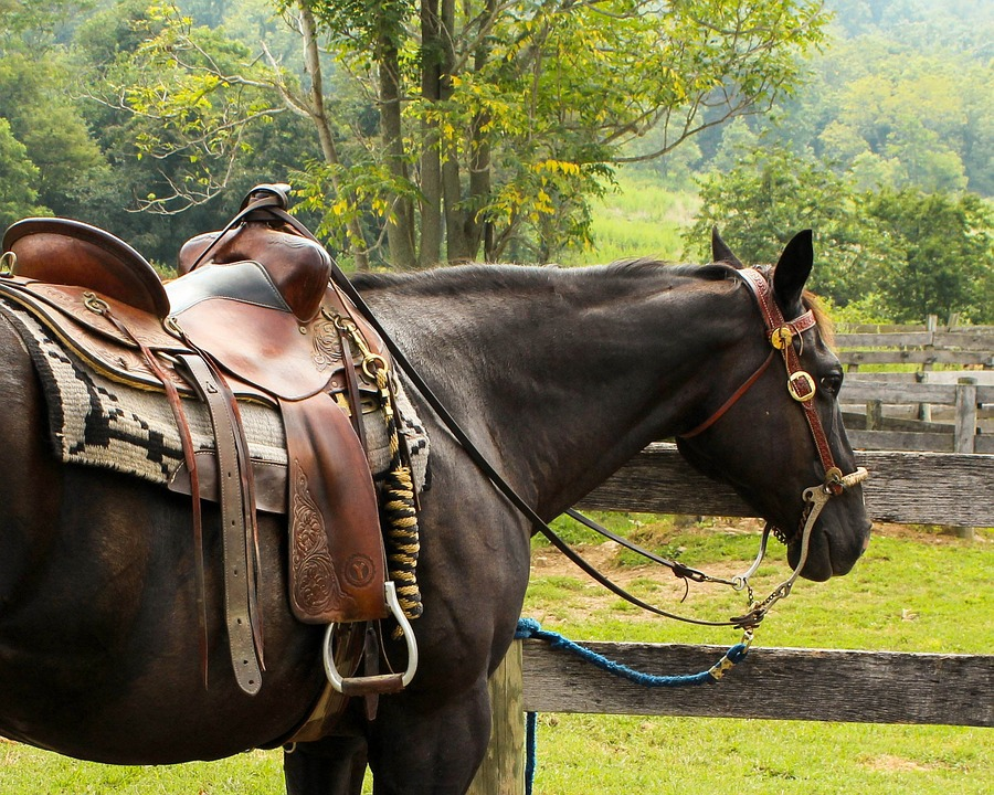 Things to keep in mind before buying an English horse saddle pad