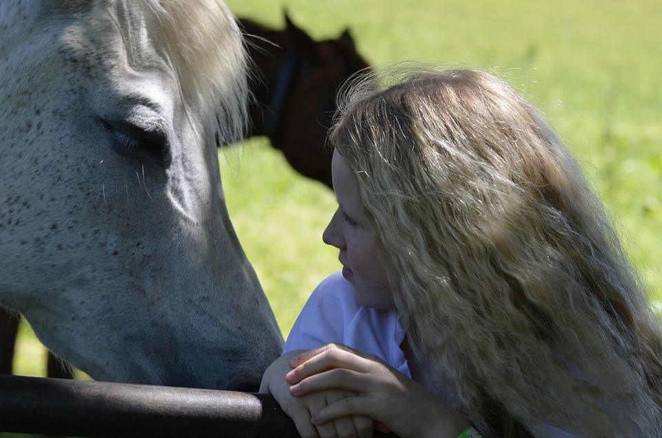 What should be kept in mind while buying the best horse shampoo