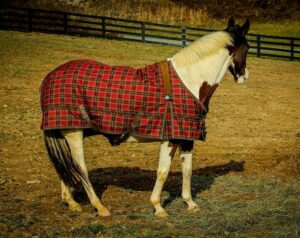 How to Choose a Horse Blanket That's Right for Your Climate