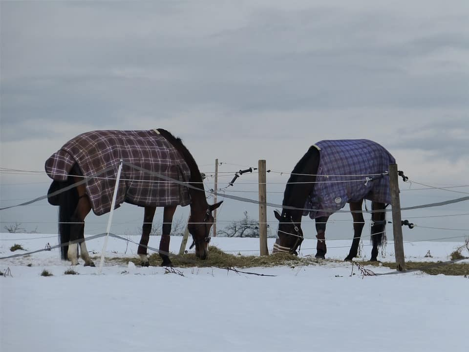 Horse Turnout Blanket