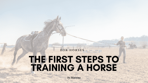 The First Steps to Training a Horse