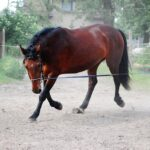 Groundwork exercises for horses