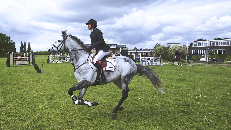 Useful Horseback Riding Techniques That You Should Always Keep in Mind 6