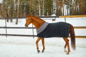 The Best Horse Blanket to Match Your Every Need