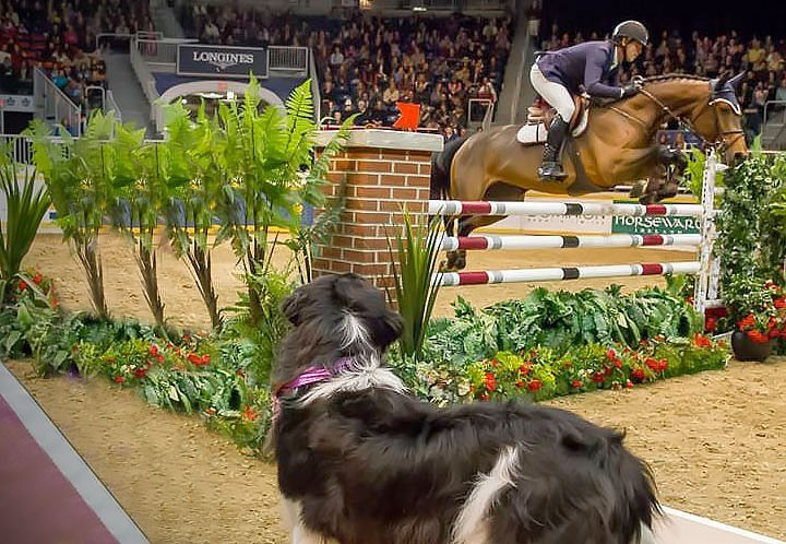 Royal Agricultural Winter Fair - My Favourite Horse Destination 2