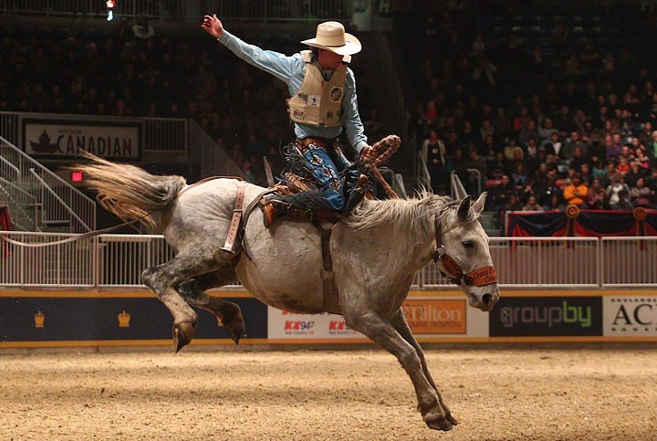 the royal horse show has everything from show jumping to rodeo