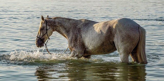 take your horse swimming