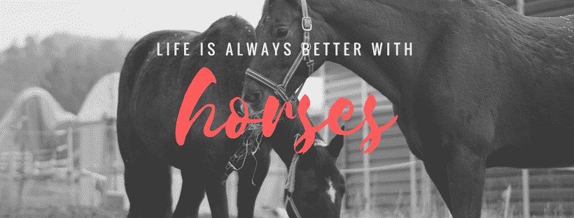 You Have to Be Crazy To Love A Horse. Money. Time. Dating. It All Comes Second... But It's 100% Worth It. 1