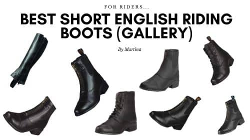 best short english riding boots