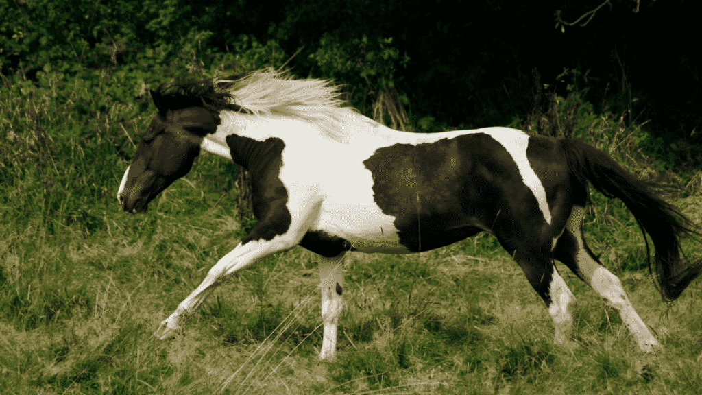 hot horses and How To Slow Down A Horse