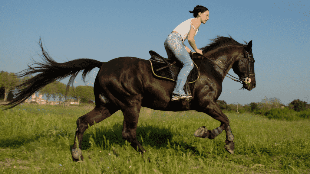 How To Slow Down A Horse 3