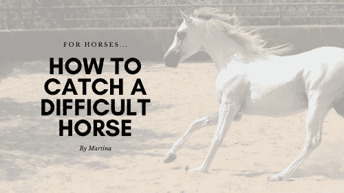 How to Catch a Difficult Horse