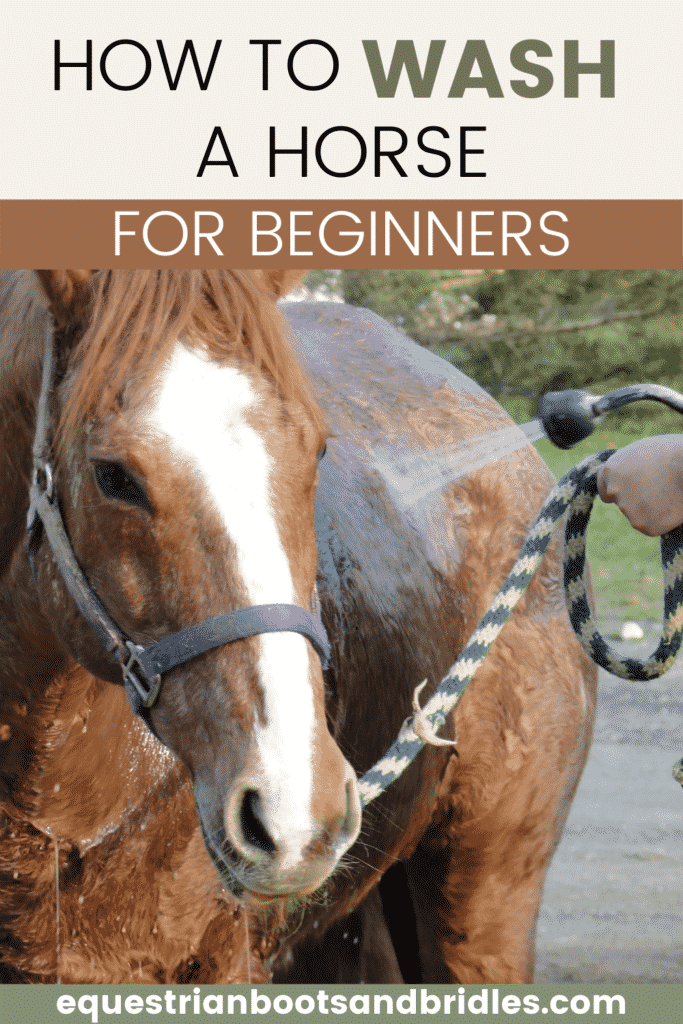 How to Wash a Horse for Beginners 8