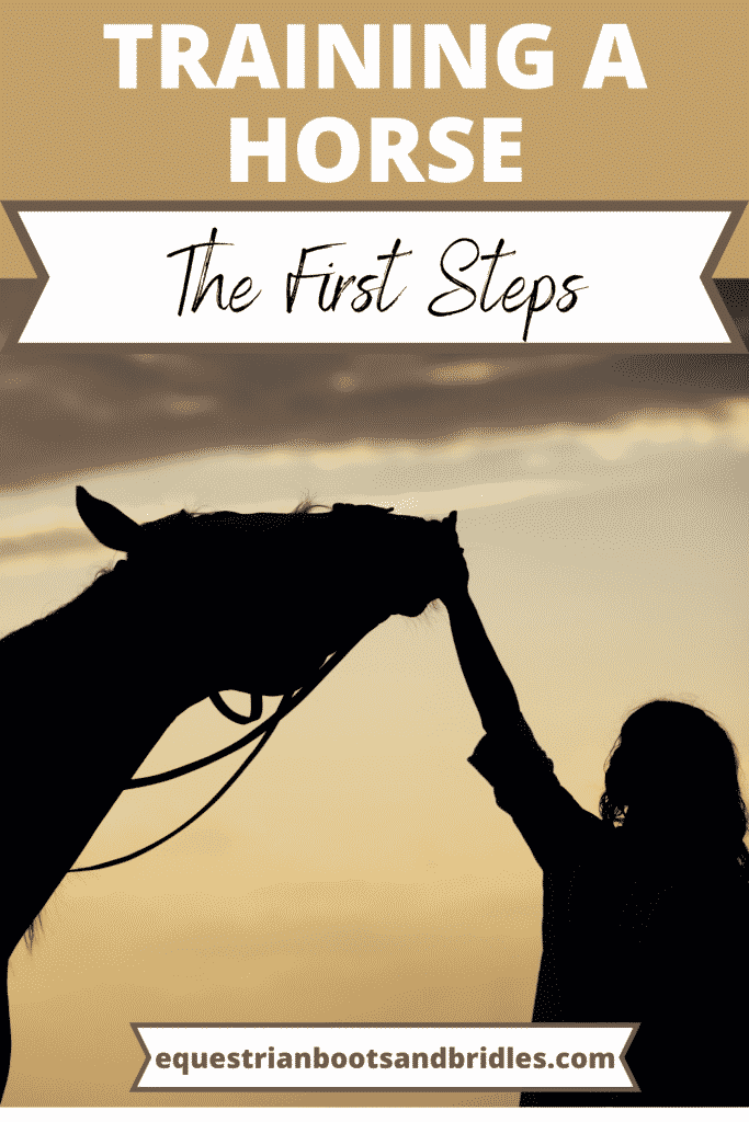 The First Steps to Training a Horse 12