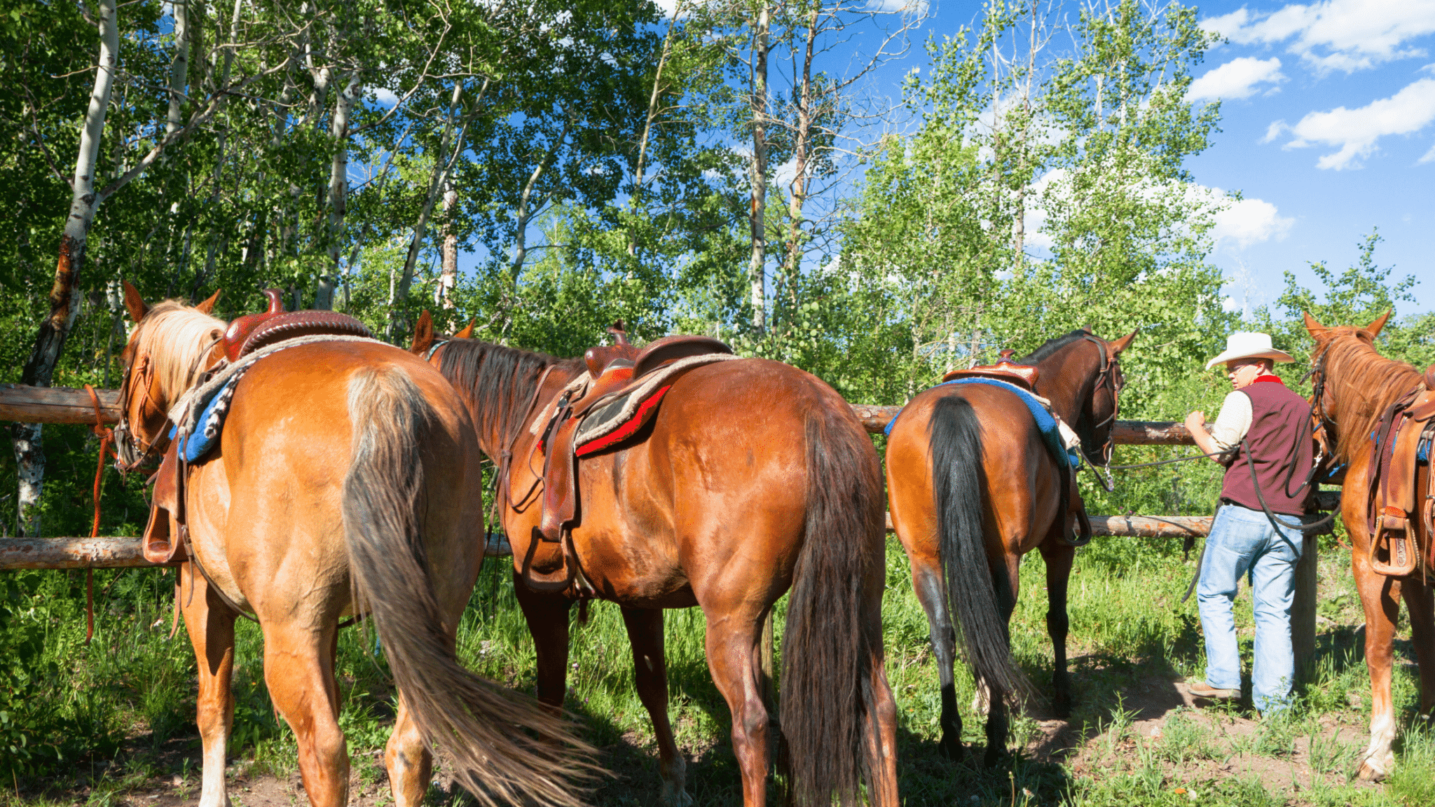 How Far Can You Travel by Horseback in a Day: Things You Need to Know 2